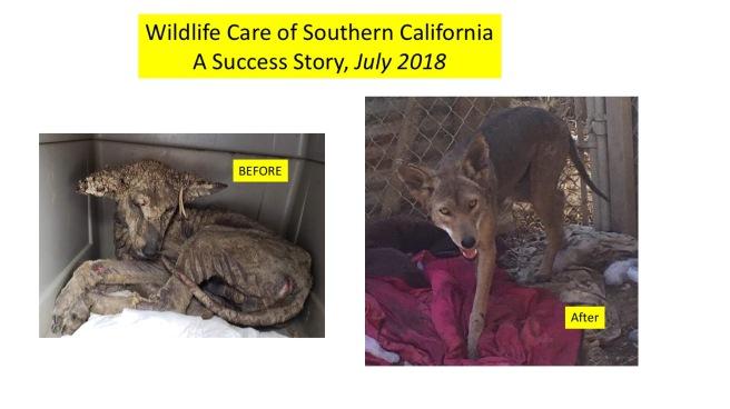wildlifecareJuly2018
